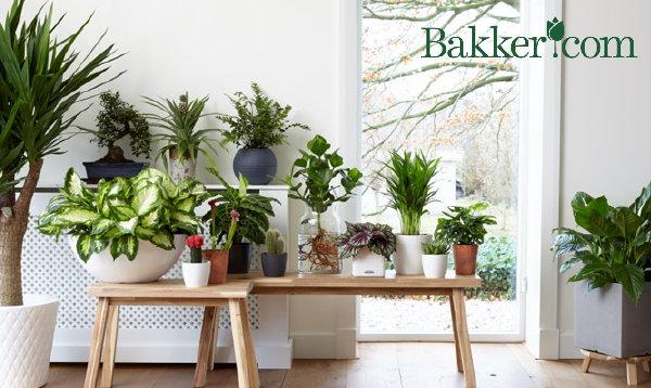 excellent welke woonplanten en passen in jouw planten tips