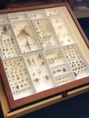 Darwin's insect collection