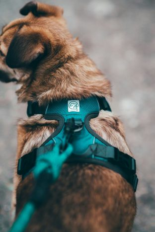 best dog accessories including Dog Harness