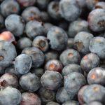 Blueberries for Wanda