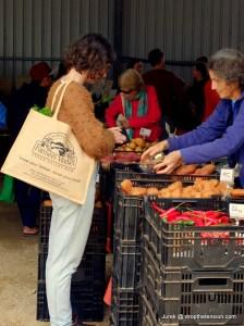 Farmers Market in Murwillumbah