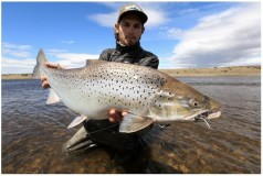 Sea trout photos