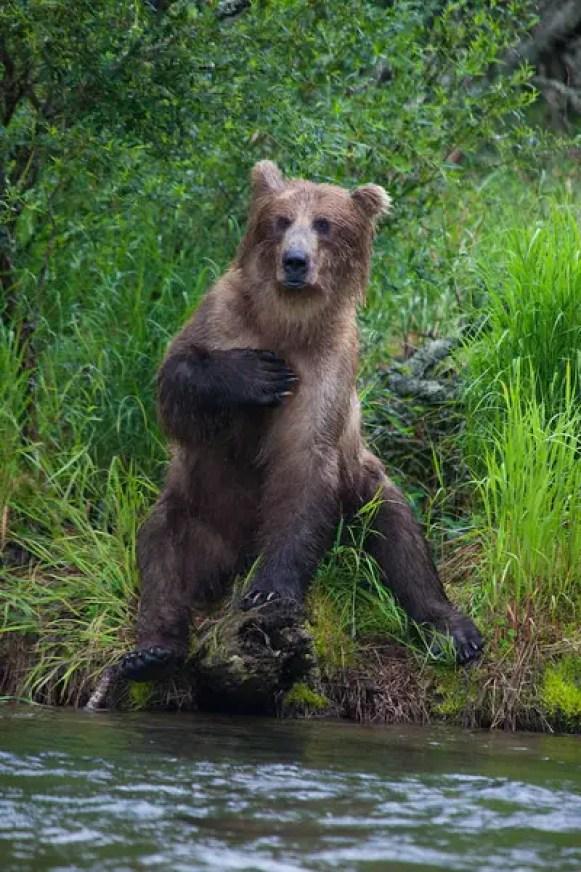 Alaska, No See Um Lodge Bear