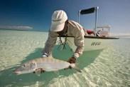 Big bonefish, Matt Harris