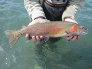 Lahontan Cutthroat Trout Pyramid Lake