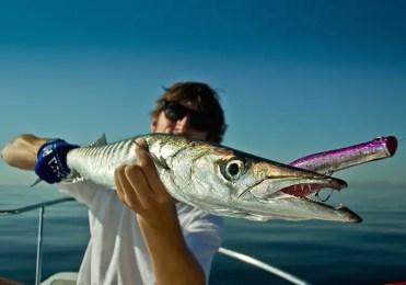 Boat Fishing Canary Islands