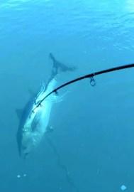 Tuna Fishing Canary Islands