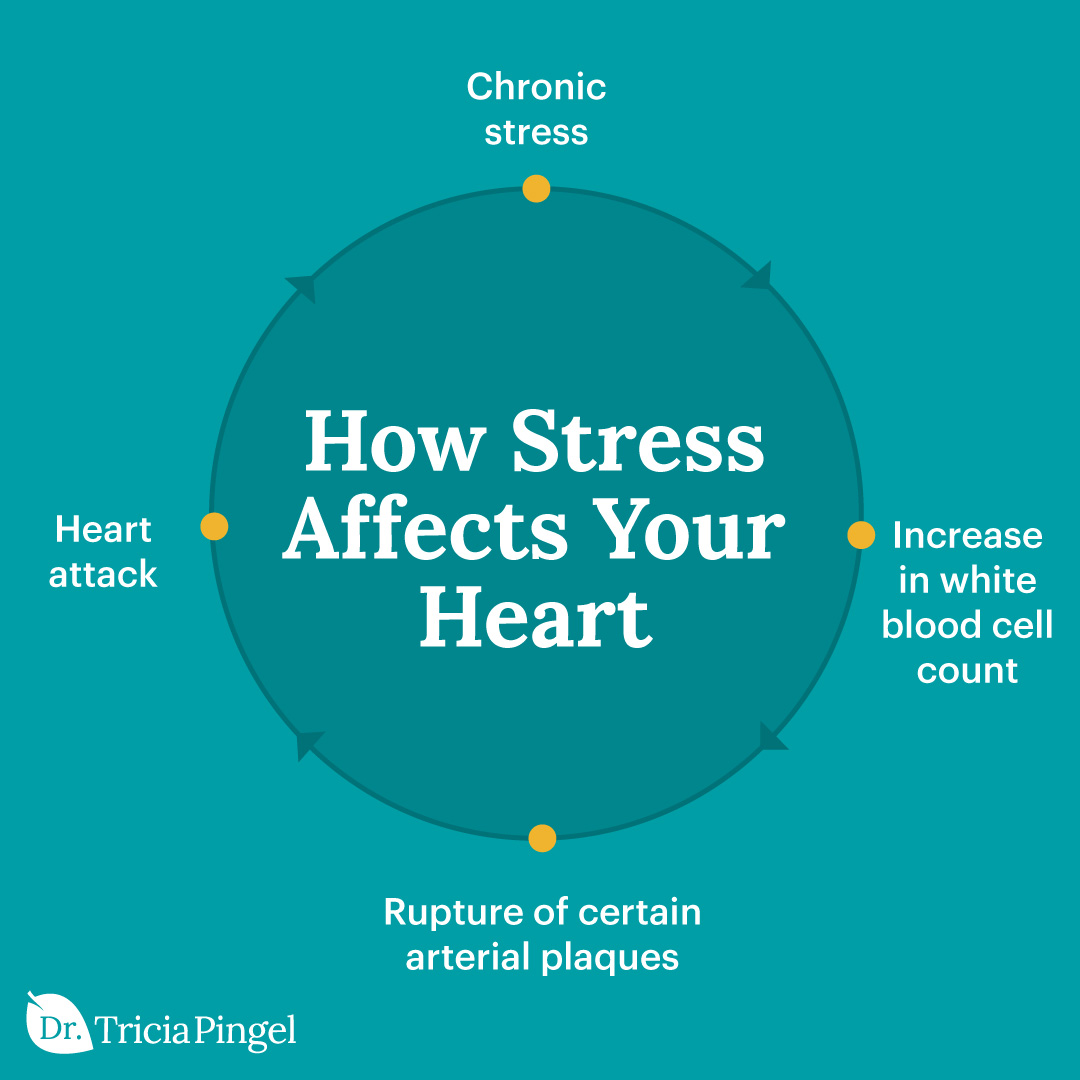 Effects of stress on the heart - Dr. Pingel