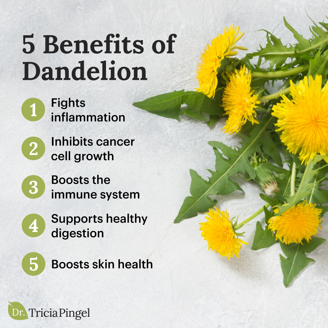 Health benefits of dandelion - Dr. Pingel