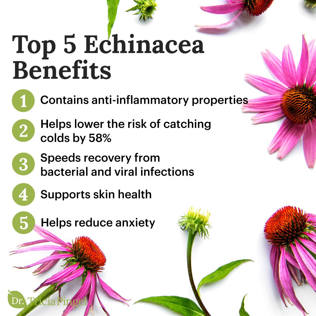 Echinacea benefits - Dr. Pingel