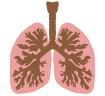lungs brown and pink