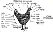 Permaculture Chicken