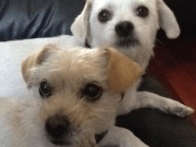Alberts dogs