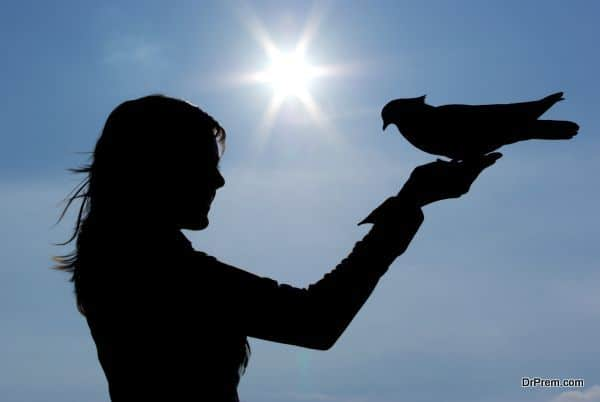 Silhouettes of girl and pigeon
