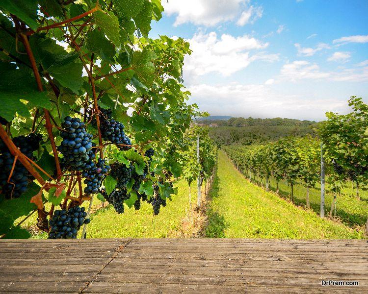 vineyards of Rhone Valley