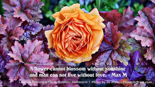 Flower Blossom - Photoquote - Dr Prem