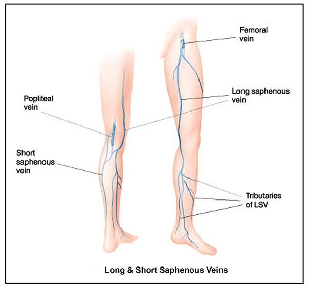 veins of lower limb