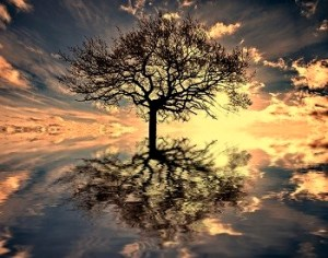 Tree_Waters_Reflection_Sunset_web