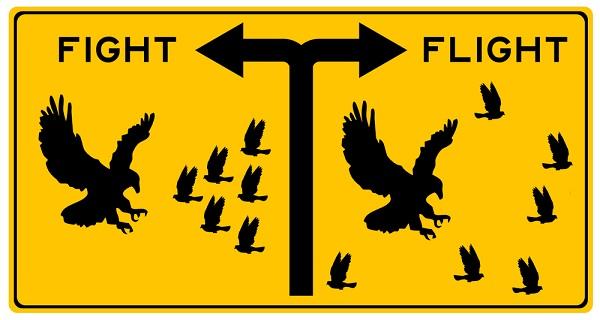 fight flight.jpg