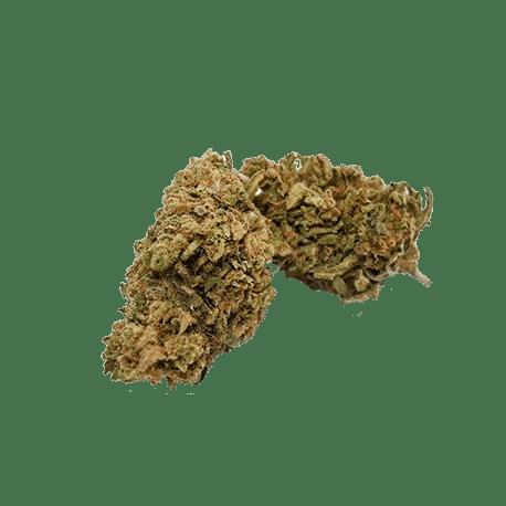 Fleur de CBD Kiwi