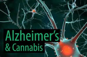 Alzheimer Brain May Be Helped By THC In Cannabis