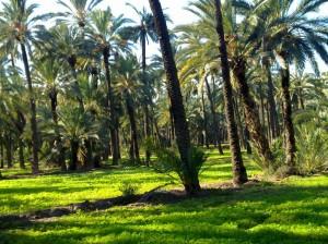 El espectáculo de la primavera de invierno en las palmeras
