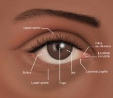 El ojo de raza negra, detalles