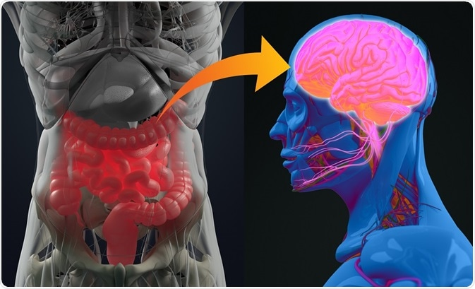 Gut Brain Axis (connection)