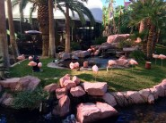 In the flamingo garden