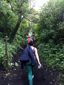 Through the undergrowth