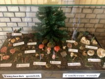 One of many cabinets showing the variety of fungus available