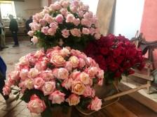 Still more roses