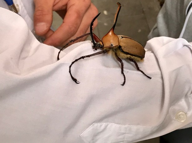 A giant beetle we found near the station