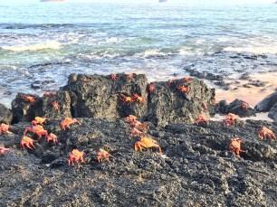 A ton of crabs