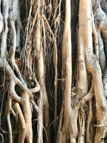 Close up of a tree inside the International Market Place