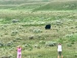 The black bear walking toward us