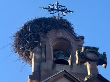A closeup of one of many stork nests
