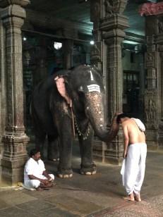 Elephant blessing