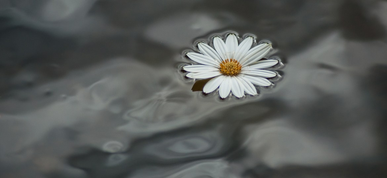 Inspiration: Flowers of Friendship