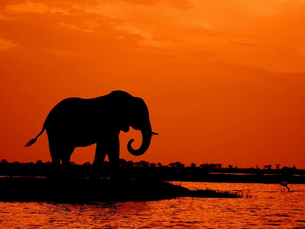 silhouette of elephant during sunset