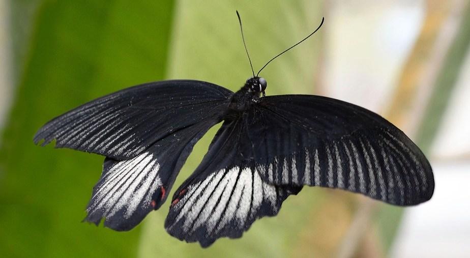 butterfly-2869795_1280