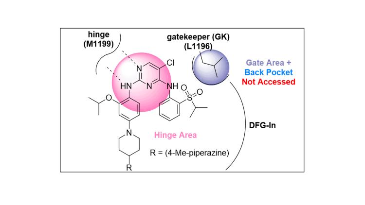 Type I Kinase Inhibitor