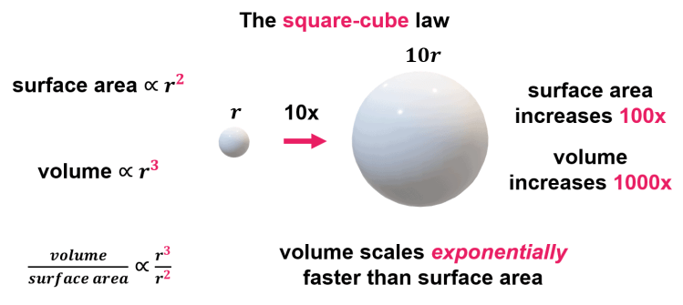 The square-cube law