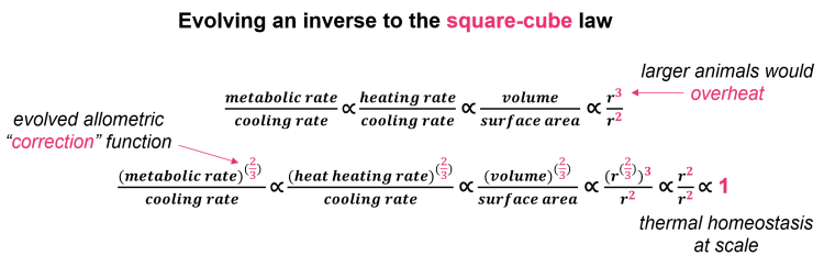 Inverse to square-cube law