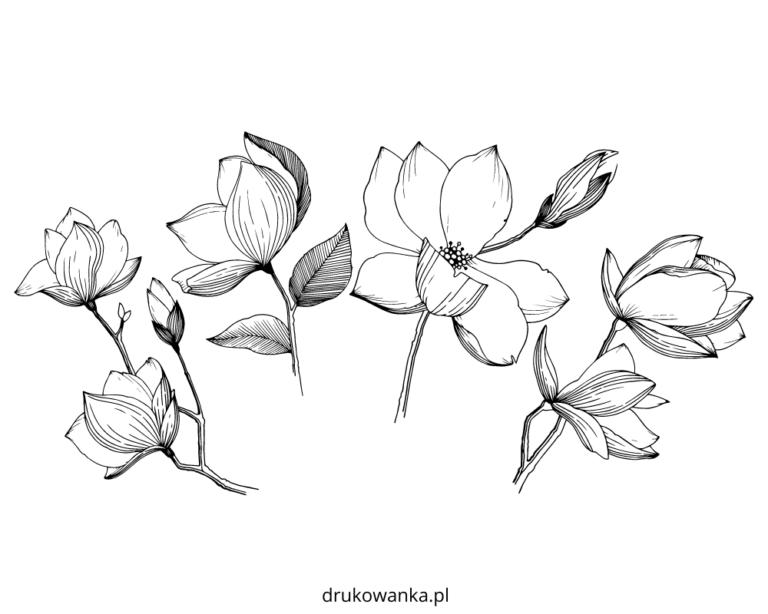 Kolorowanka Magnolia kwitnie do druku