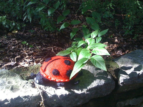 June the Lady Bug – Free Pattern Tuesdays