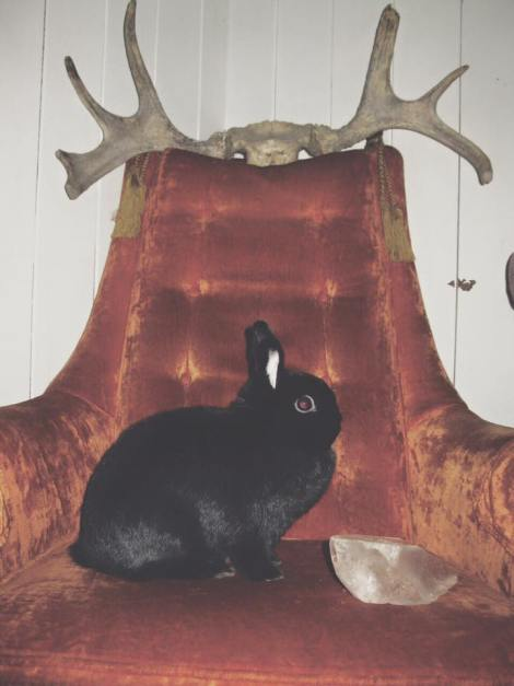 bunniculathrone.jpg
