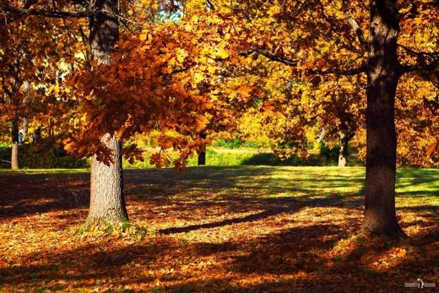 Золотая осень в Марьино