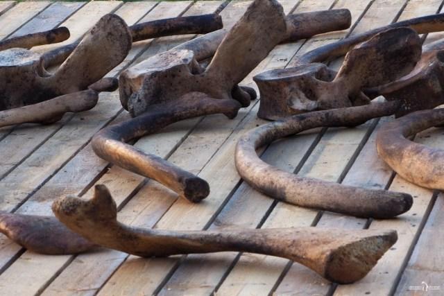 Артефакты животной фауны Севера