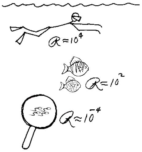 Summer School of Science